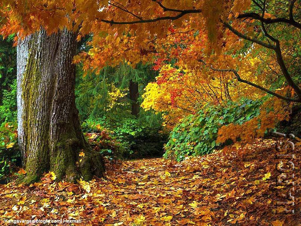 پاییز فصل رنگها و خاطره ها