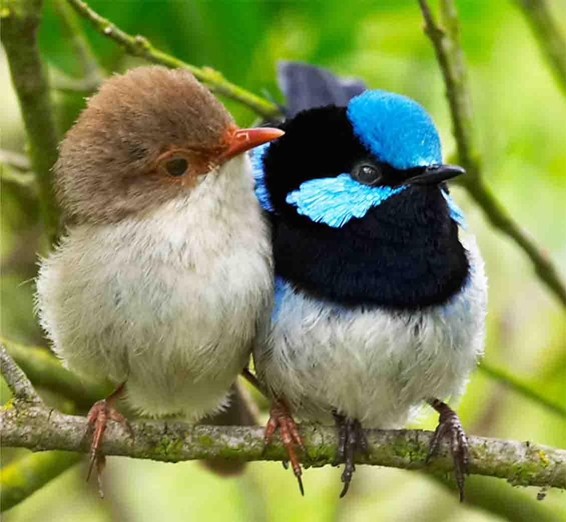 صفحه اصلي - گالري تصاویر - پرندگان