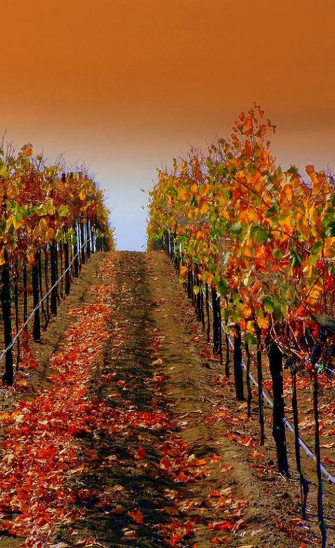 عکس, تصویر, شعر و اس ام اس های جدید فصل پاییز