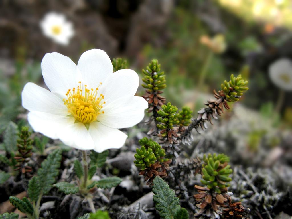 [تصویر:  1_Flower.jpg]