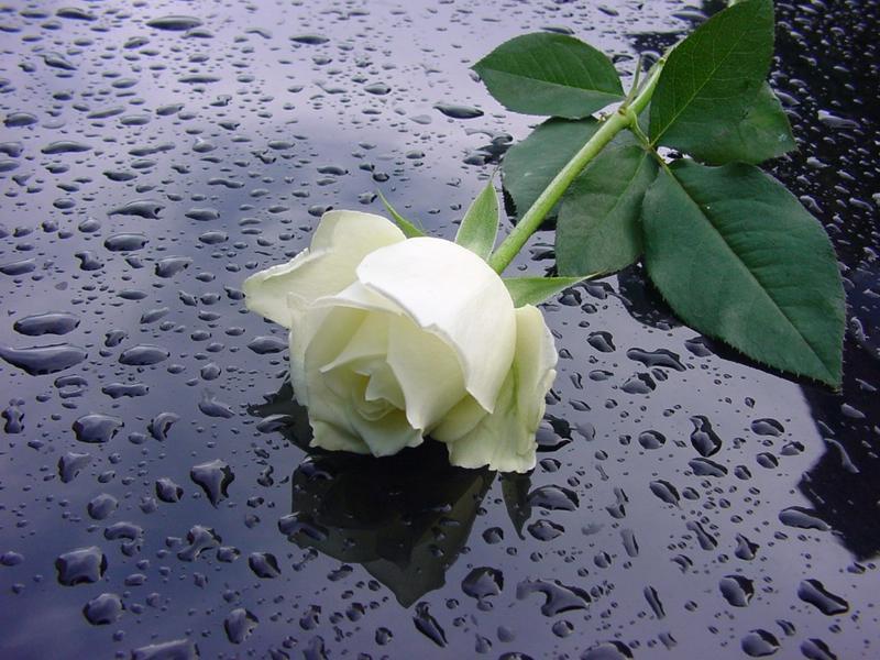 نمايشي برو به گل