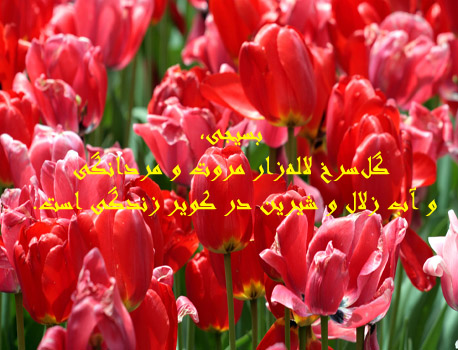 [تصویر:  2_33431985896442389456.jpg]