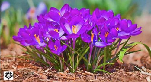 بهار فاطمی-ویژه نامه فرا رسیدن عید نوروز و عطر بهار فاطمی 1395