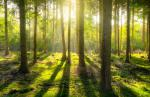 forest_sun_shadow_green_yellow_nature_landscape_li ght-1170968.jpg